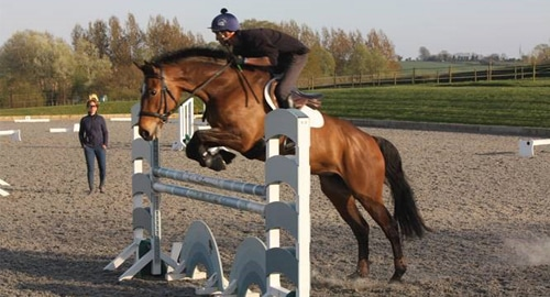 Alex and CHS Lexi training feature image