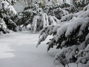 Snow--and more snow