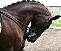 Close-up of horse in extreme rollkur chin touching chest