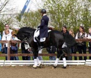 Totilas, considered by many to be the winningest Dressage horse, ridden in rollkur