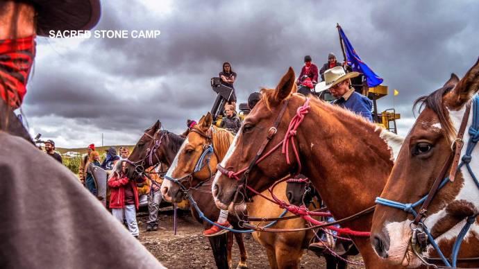 dakotaprotesthorses