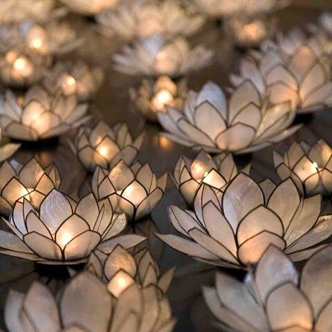 The lotus flower grows from the mud pushing through thehellip