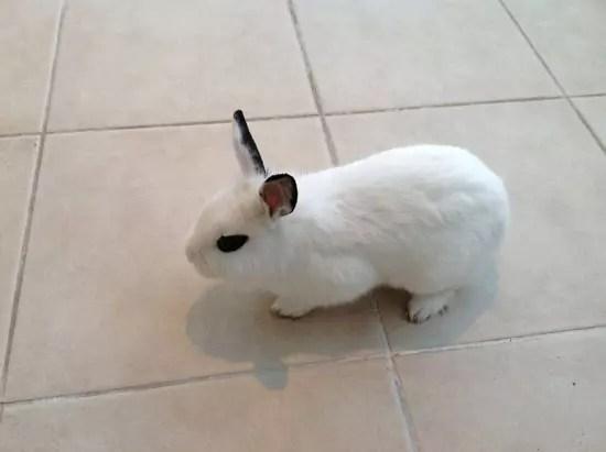 Κουνελάκι, Φωτο από το νέο iPad