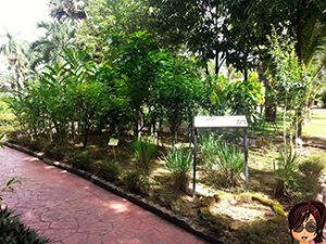 Herbs-garden1
