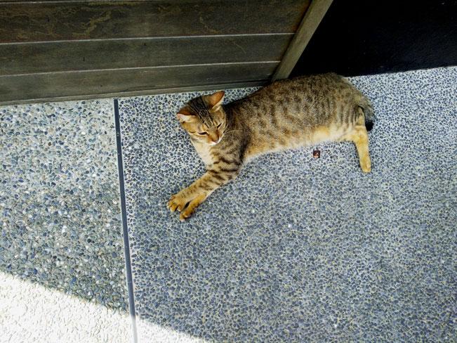 懒洋洋的猫咪~