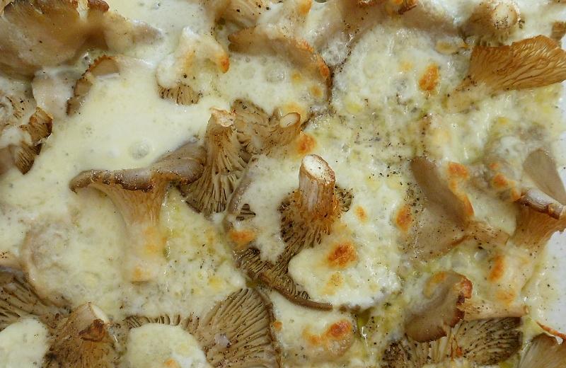 Austernpilze mit Mozzarella überbacken 3