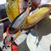 Como pescar los malecones y no morir en el intento