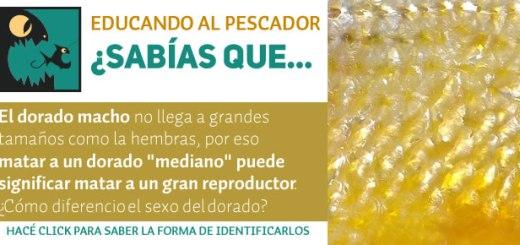 infografia_dorado2_prev