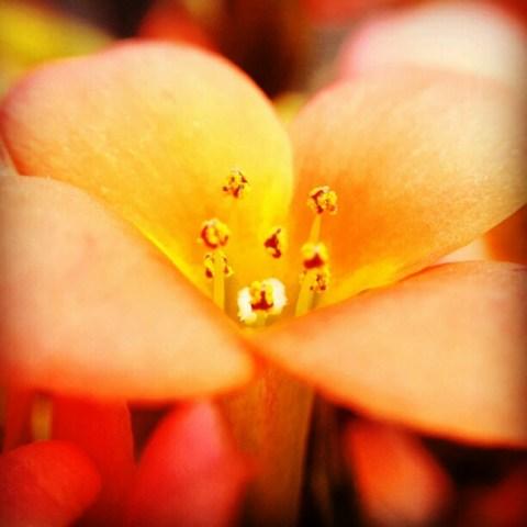 Flower macro II