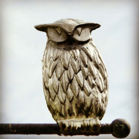 Owl up high
