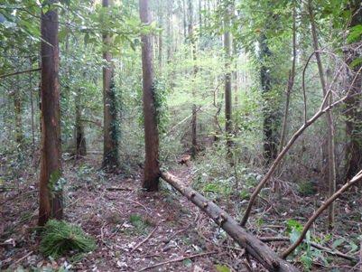 竹林の入り口