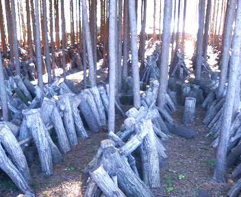 しいたけ林