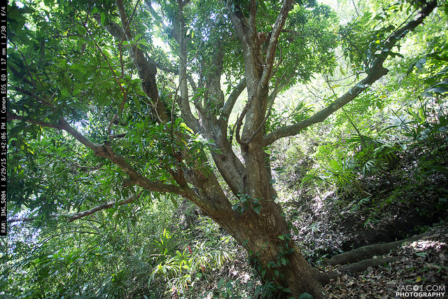 Tree of life - PermaTree 21291367648_9ee8fbb1da_z
