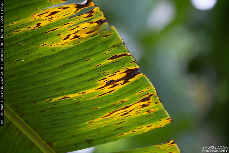 Green Green Palm Leaf Quindio Colombia