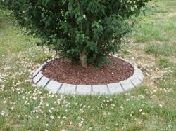 Small Of Landscaping Around Trees Ideas