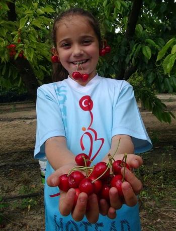 'Meyve bahcesinden kendin topla kendin al' donemi