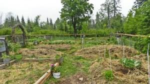 In the Garden: June 15th, 2016