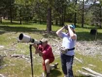 Yosemite-Birding-Naturalist-Tour-YExplore