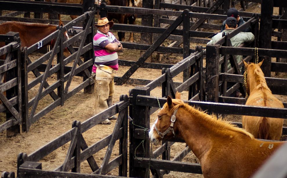 Un vaquero se encarga del cuidado de los caballos en el establo mientras se preparan para una presentación de crías de las mejores razas. (Elton Núñez - Mariano Roque Alonso, Paraguay)