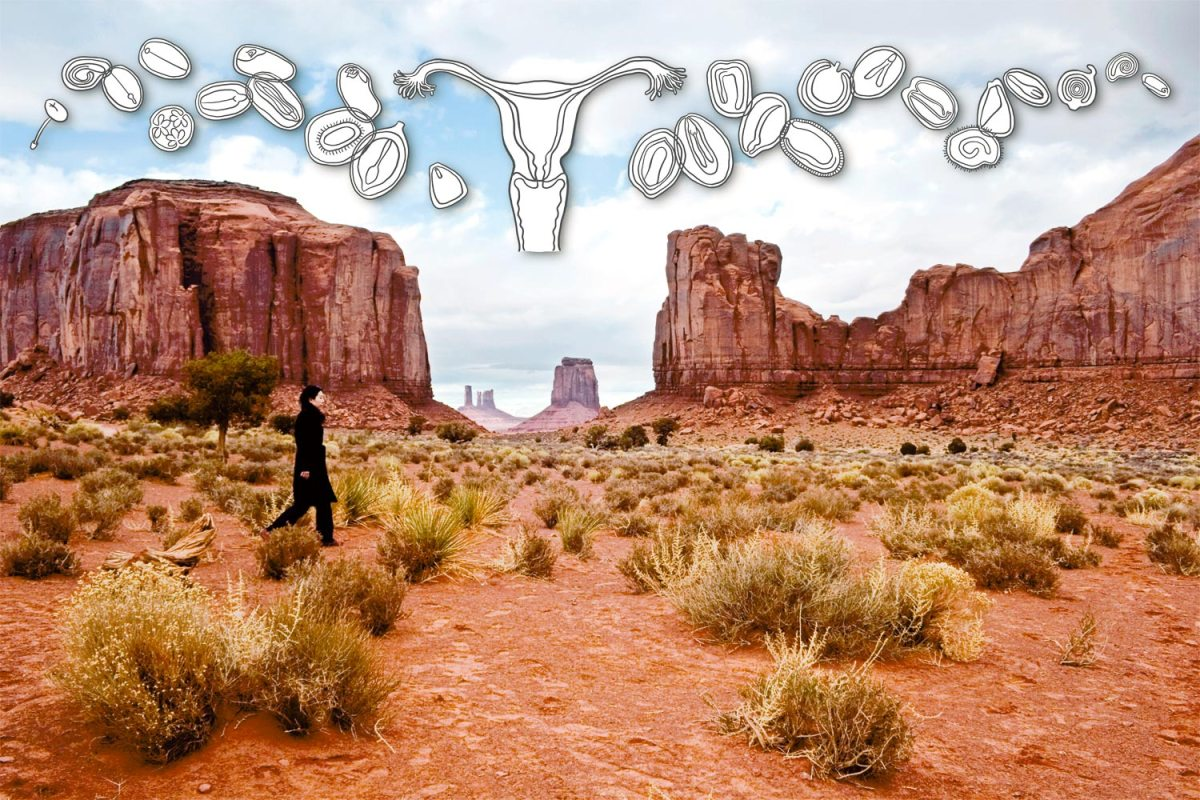 The Journey of Seeds Into the Sacred Monument Valley