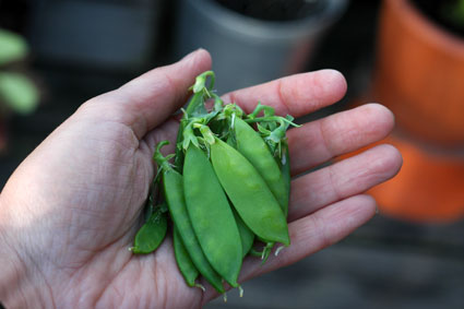 Handful of Peas