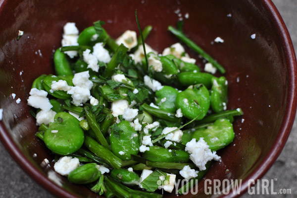 Pan Fried Garlic Scapes with Fava Beans