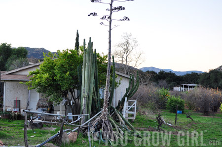 rancho_hike_agave