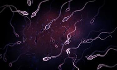 sperm-count