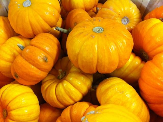 Pumpkin minis