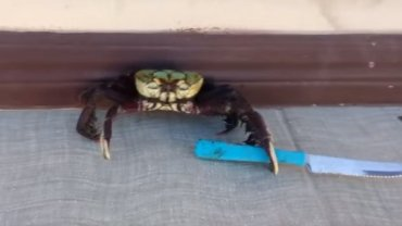 Funny crab with a kinfe