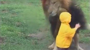 Lion vs toddler in Japan
