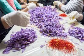 Για ένα κιλό κρόκου Κοζάνης χρειάζονται 8.500 μωβ λουλούδια