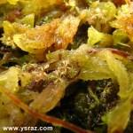 נבטי-טללית-Drosera-brevifolia