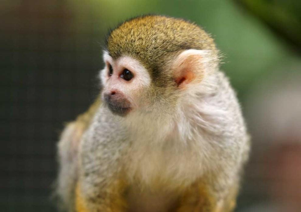 صور حيوانات روعة 2016 ، صور حيوانات مميزة 2016 ، حيوانات جديدة روعة yun_1005.jpg