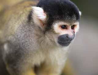 صور حيوانات روعة 2016 ، صور حيوانات مميزة 2016 ، حيوانات جديدة روعة yun_3852.jpg