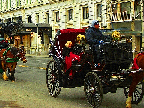 NY- Horse Drawn Carriages on Central Park South