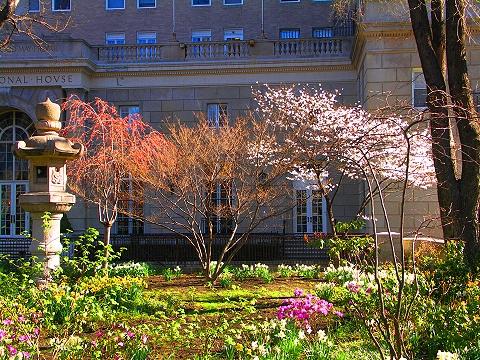 NY- Sakura Park Cherry Blossoms, International House