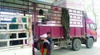 <p>A mediados de abril, Han Jing, un campesino de 39 años de la provincia de Shandong, volvió a su casa después de haber estado negociando en el mercado. Allí, los repollos que él cultivaba se estaban vendiendo al irrisorio precio de entre 0,08 y 0,1 yuanes. De vuelta a su hogar, desesperado, después de beber y llorar, decidió acabar con su vida.</p> <p>El medio kilo de calabacines que Han Jing vendía por 0,08 yuanes se estaba vendiendo en los supermercados de las ciudades chinas por 1,6 yuanes.¿Cómo se puede pagar tan poco a los campesinos que cultivan las verduras y después vender sus productos a precio de oro en los supermercados? ¿Quién se estaba quedando con todo ese dinero?</p>