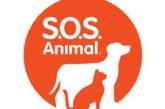 """""""SOS Animal"""" regressa à SIC para uma nova temporada"""