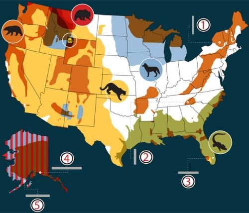 45205-BP0912_AnimalAttack_map