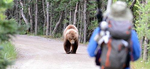 bearsafety_3