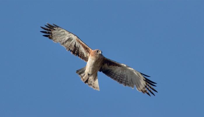 To jest historia orła…