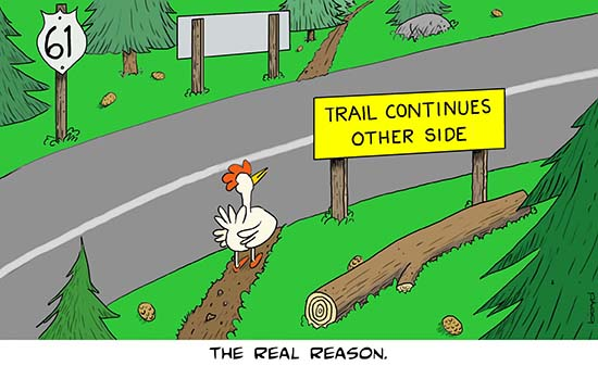 Chicken pauses at road
