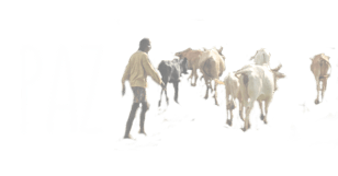People, Animals and their Zoonoses