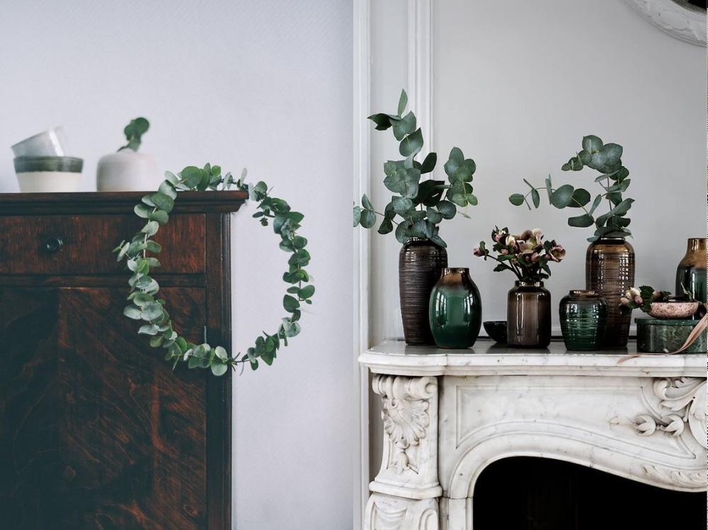 eukaliptusa