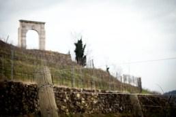 NEGRAR (VR) LOCALITA' ARCO DI GIOVE Vigneto Valpolicella DOP