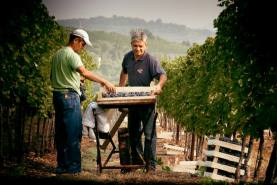 la vendemmia - the harvest