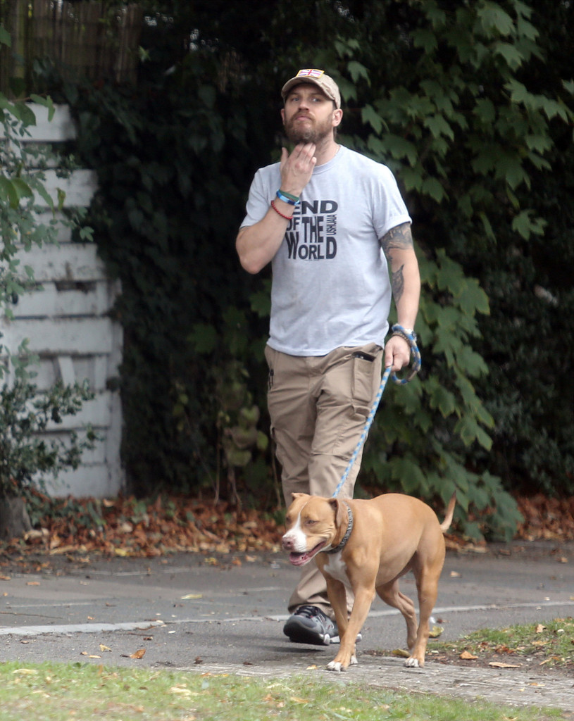 Charmful Tom Hardy Photos Photos Tom Hardy Walks His Dog London Zimbio Tom Hardy Dog Walking Tom Hardy Dog Bane bark post Tom Hardy Dog