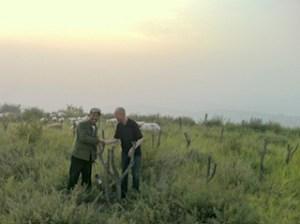 Reforestation_China_1