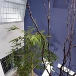 Plant (Image Courtesy LIJO RENY architects)